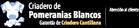 Comprar pomerania Blanco. Criadero Pomerania Blanco